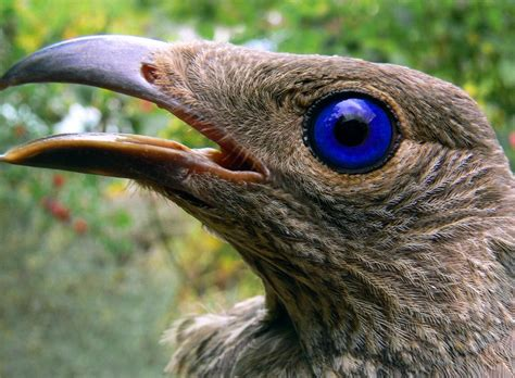 Of The Worlds Weird Animal Behaviors Instincts