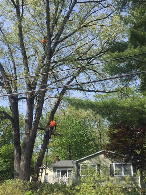 tree removal   madison  jersey tree removal nj