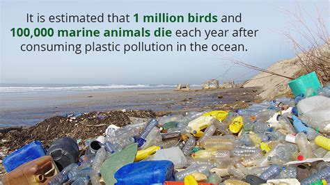 Plastic Waste Continues To Threaten Our Health And