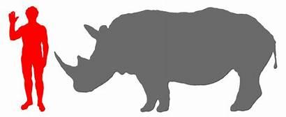 Rhinoceros Human Rhino Compared Google Moose Animals