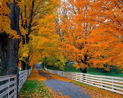 Fall Leaves South Louisiana Driveway Autumn Rain