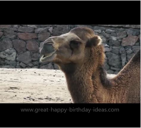 happy birthday camel card  specials ecards greeting cards