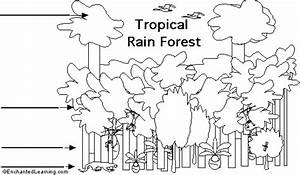 Tropical Rainforest Strata Diagram To Label