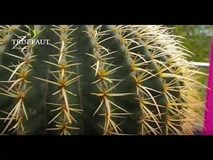 Comment Entretenir Un Cactus : comment entretenir un cactus jardinerie truffaut tv ~ Nature-et-papiers.com Idées de Décoration