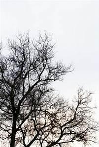 Vintage Medical Charts Dead Tree Branch Against Blue Sky Filtered Image