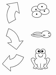Frog Life Cycle – Extras | Activities, Clip art and Shirts