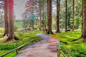 Bellever Forest - Dartmoor Woodland
