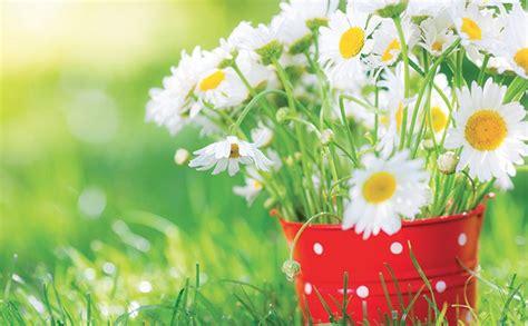 cuisine pour bébé l eau le printemps et les fleurs santé naturelle bio