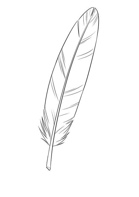 plume d oiseau dessin comment dessiner une plume dessins dessin dessin