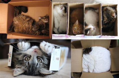 Meowses Cardboard Cat Houses With Personality  I Have Cat