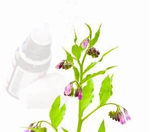 echinacea d6 globuli anwendung