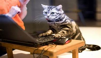 Cat Cats Wallpapers Funny Laptop Crazy Naughty