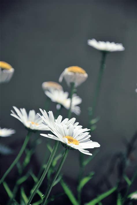 white petal flower  surface  stock photo