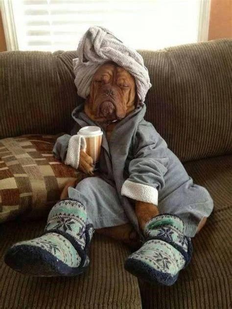 dog      comfy neatorama