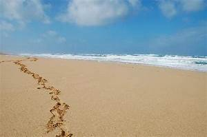 A deserted island beach... - Picture of Polihale State ...