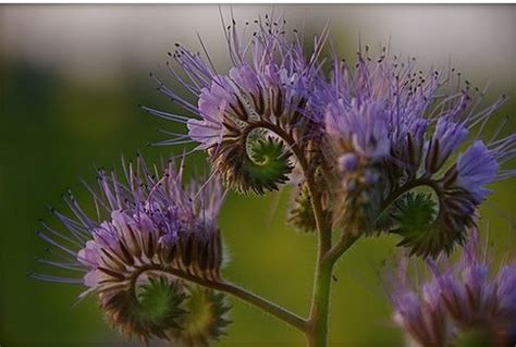 Beautiful And Unique Purple Flowers Photojpg