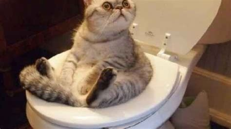 funny cat    youtube