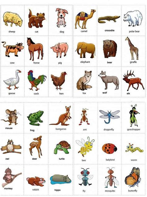 Learning Animals Names With Pictures, #vocabulary #english  English  Pinterest English