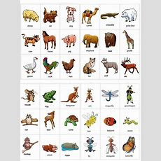 Learning Animals Names With Pictures, #vocabulary #english  English  English Grammar, English