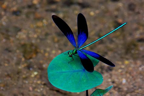 amazing dragonfly picture