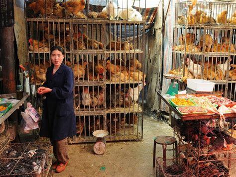 hn bird flu threats  china qa   health