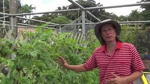 Comenzar un huerto viyoutube for 5 cultivos faciles para empezar un huerto en casa
