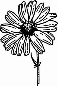 Daisy Black And White Clip Art at Clker.com - vector clip ...