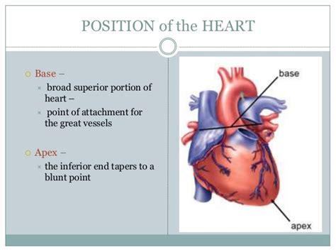 pericardial sac circulatory system 19 1 19 2