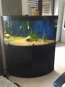 Juwel Trigon 350 : juwel trigon 350 viel zubeh r in malsch fische aquaristik kaufen und verkaufen ber private ~ Frokenaadalensverden.com Haus und Dekorationen