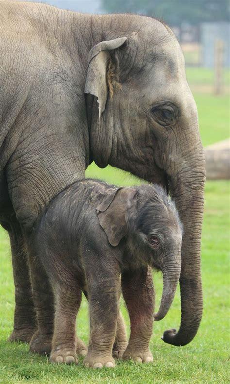 Beautiful Elephant Herd