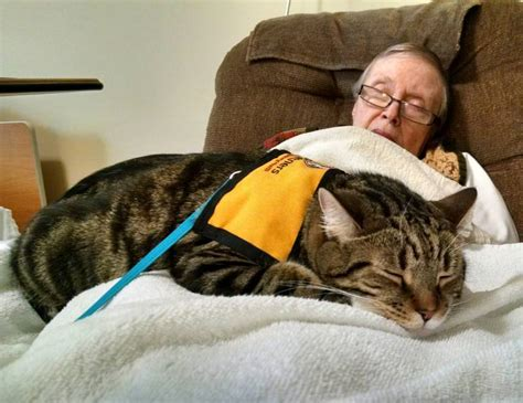 therapy cats animal assisted therapy paging dr dog scitech connect