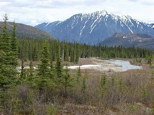 Life In The Taiga : northern territory taiga and tundra space for life ~ Frokenaadalensverden.com Haus und Dekorationen