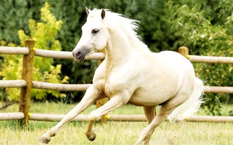 hd horse wallpapers running horses desktop pony stallion welsh backgrounds animals pretty central wallpapersafari tiffanyeatworld animal ponies animales