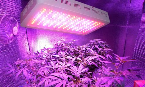 Led Light In Grow Room by The Advantages And Disadvantages Of Using Led Lights In