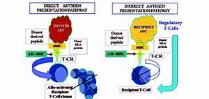 Adipose Tissue Derived Mesenchymal Stem Cells And