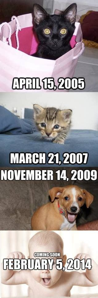 Baby Announcement Meme - cat memes memes and cats on pinterest