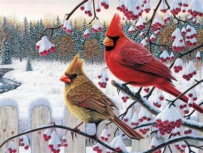 Winter Bird Birds Wild Cardinal Animal Wallpapersafari