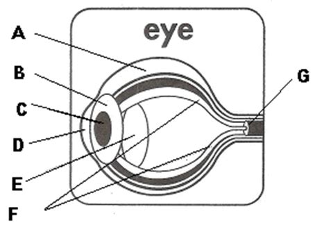 Eye Diagram For Quiz by Label The Parts Of The Eye Proprofs Quiz