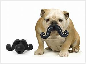 17 best images about four legged furbabies on pinterest for Really tough dog toys