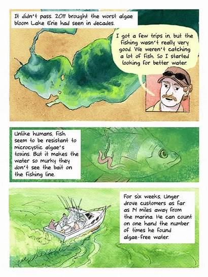Algae Comic Lake Bloom Strip Erie Explains