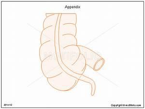 Appendix Illustrations