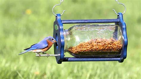 duncraft bug a view jar bluebird feeder 4346 youtube