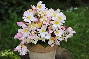 Blumen Für Schatten : pflanzen schatten garten mit schatten pflanzen welche ~ Lizthompson.info Haus und Dekorationen
