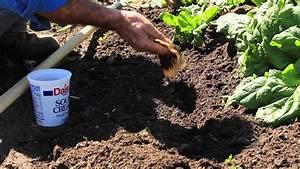 5 tips tricks for beginner gardeners plant