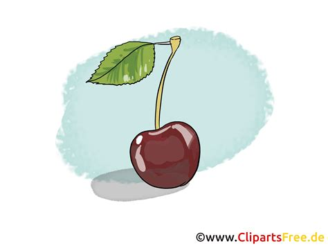 kirsche illustration bild clipart kostenlos