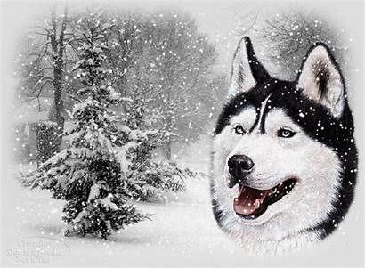 Snow Wolf Animated Christmas Scene Fall Wolves