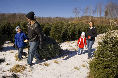 tennessee christmas tree growers christmas tree farms in