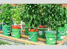 5 Gallon SelfWatering Tomato Container DIY projects for