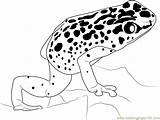 Frog Poison Dart Coloring Sheet Clipart Printable Colouring Arrow Clip Popular Library sketch template