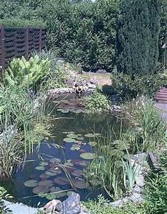 Wasserpflanzen Teich Kaufen : ber 20 wasserpflanzen f r den gartenteich teich ~ Michelbontemps.com Haus und Dekorationen